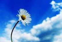 mi cielo azul / variado y todo hermoso