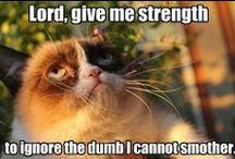 Grumpy Cat / Grumpy cat mémek