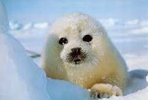 All Arctic