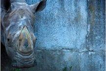 Elephant, Hippo, and Rhino