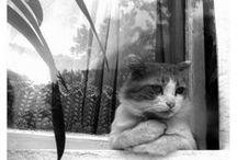Cats, Kittens, Felines, Fur! / by Jen Babe