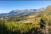 Scenic farm for sale in Paarl / The gentle breeze that sways the hanging branches of the aged trees to and fro creates a soft rustling noise; the crunch of soft dirt under your shoes and the sweet smell of the mountain air are all part and parcel of this wine estate for sale at the foot of the Klein Drakenstein Mountains in Paarl.