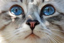 *Kitty Cats* / Puuurfect beautiful cats!! Meawww...:)