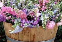Mien Toentje / Moestuinieren, Bloemen & Planten