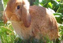 rabbit's playground / voedingen spelen met je konijn(en)