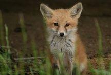 Cute Animals / Spreading the cuteness of the animal kingdom.