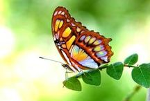 Butterflies / Butterflies are so beautiful and graceful. If you want to join the group email me at biahome4u@aol.com. I am a Baltimore area Realtor. Www.TheCordwellGroup.com