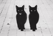 BLACK CAT - CHAT NOIR / #chat #chat #noir #black #photo