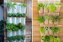Urban gardening / Ideas how to be an urban gardener.