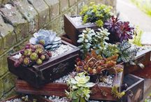 Garden / Growing everything fresh!