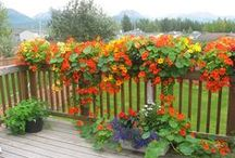Garden ideas.  idéer till trädgården, puutarhaideoita / puutarhaideoita, taidetta yms