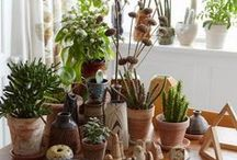 Potted Plants / Green garden buddies.