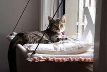 Kitty Condos / Condos and fun things for cats.