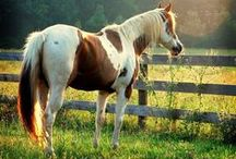 "horses / ""In riding a horse, we borrow freedom""  ― Helen Thompson"