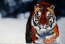 Animal Spirit Guides / My totem involves these animals / by Martina Mayham