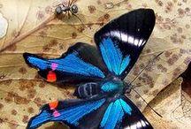 Motýli/Butterflies