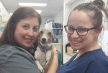 Veterinary Staff loving patients / Photos of our staff giving the best care possible.