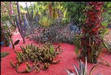 Succulent Sanctuaries / Outdoor rooms decorated with succulents and cacti.