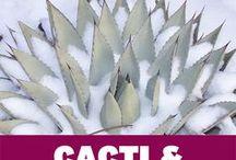 Hardy Boy Succulents / Cold-tolerant and heat-tolerant succulents