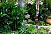 Tropical Flair Succulents / Succulents can add a tropical flair to landscapes.