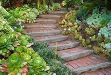 Paths and Succulents / Slowing down to take a closer look at succulents and cacti along our way.
