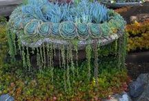 Fountains of Succulents / Overflowing with succulents!
