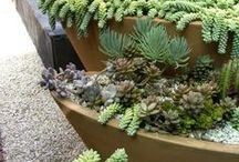 Borders of Succulents / Using succulents along landscape borders and small spaces