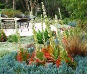 Drought-tolerant Delights / Succulents and cacti thrive in water-scarce landscapes