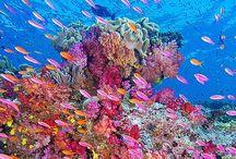 Sea Life...