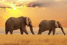 Wild Life...
