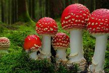 Mushrooms...