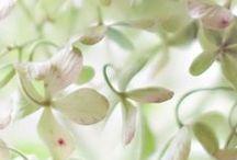 Délicatesse / « Les papillons ne sont que des fleurs envolées un jour de fête où la nature était en veine d'invention et de fécondité. » George Sand Extrait des Contes d'une Grand-Mère