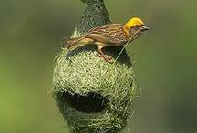Il fait si bon au nid . . .