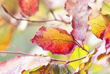 Automne ! colore-nous . . . / « L'automne est un andante mélancolique et gracieux qui prépare admirablement le solennel adagio de l'hiver. » George Sand