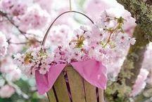 Le Printemps, la Belle Saison /   » Un matin, j'ai vu les printemps sur la mer. Les flots étaient un tapis de lilas où se posaient de grands oiseaux blancs, pareils à des pétales de fleurs d'amandiers. »   Poème persan. / by Mariecapucine