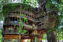 Tree house & cool Homes / Cool Tree Houses & Hobbit homes / by Tracey Holifield