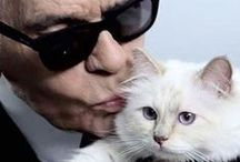 Lagerfeld / photos of a strange old man and his cat