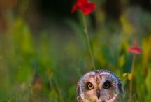 you had me at owl