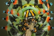 Insect Photography / Beautiful bugs photographed around the world / by Orkin Pest Control