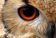 Owls / by Rachelle Culbert Pegg