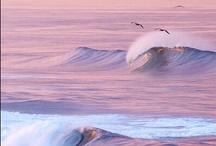 Ocean Lifestyle