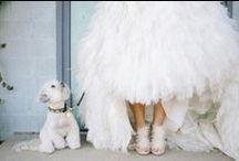 WEDDING DOGGIES