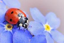Ladybugs / Everyone's favorite lucky bug!
