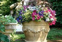 Garden dreams / Me encantan los jardines, algún día tendré una casa con un jardín y podré sembrar todas las flores que quiera!!