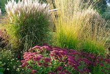 Ornamental Grasses / movement in the garden / by Kathy Walker