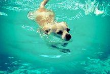 Chi hua hua !!! / Chihuahua!!! / by Kriste Camsky