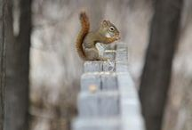 SQUIRRELS / Squirrels / by Abby Owen