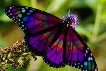 Butterflies / I love butterflies!