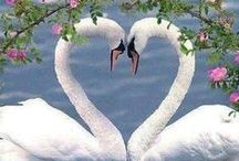 Love is ... everywhere! / Pictures of true love