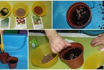 OGO - groeien en bloeien / Ogo thema groep 4 groeien en bloeien